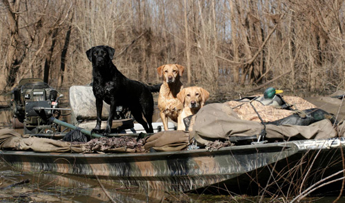 DogsInBoat