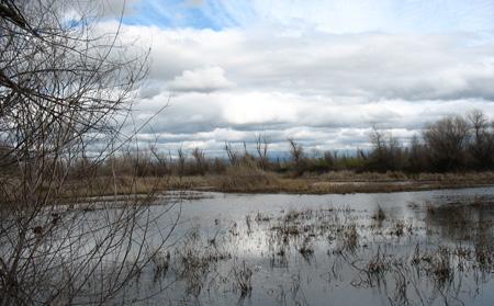 Honcut Creek Ranch wetland